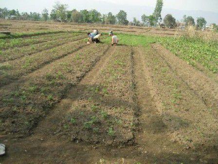 Bio Bauernhof, Nepal