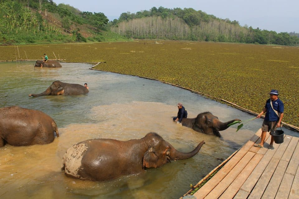 Elephant Conservation, Laos