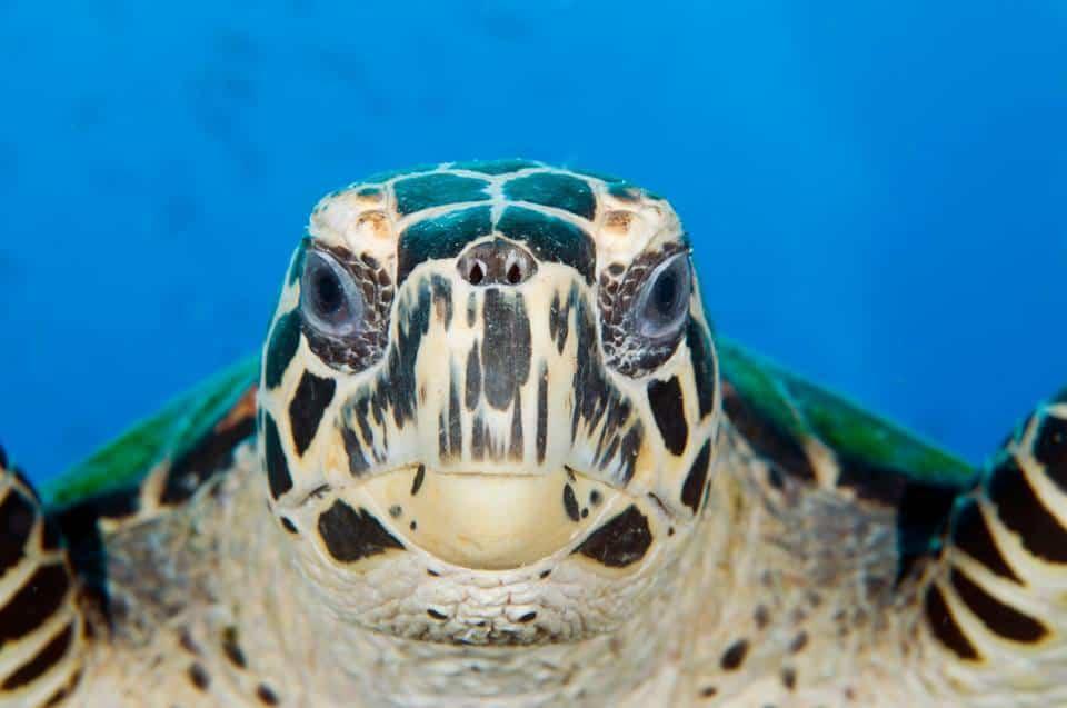 Schildkrötenprojekt, Costa Rica