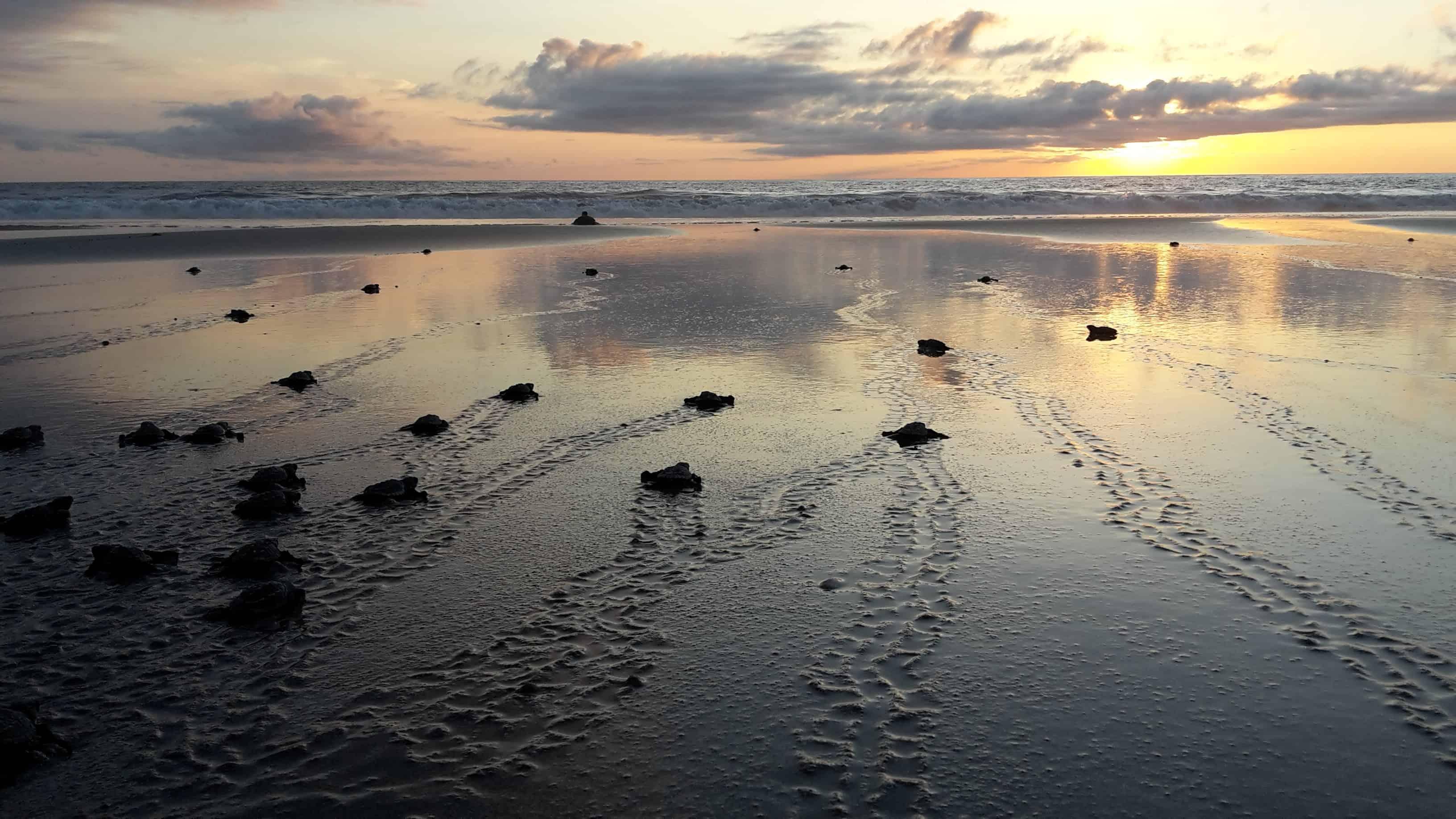 Tanja Herk, Costa Rica, Schildkröten auf dem Strand