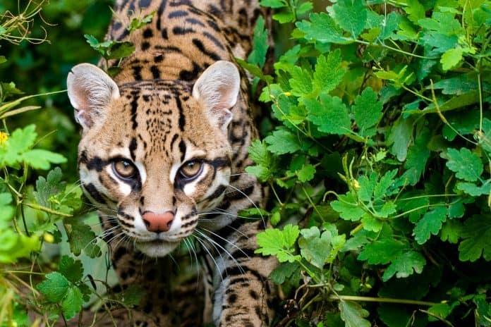 Tierschutz, Honduras