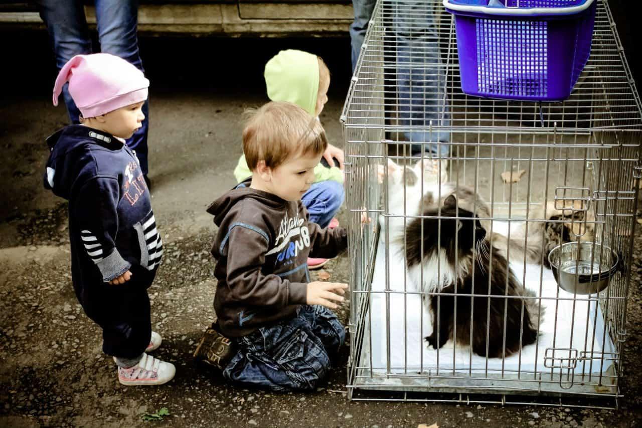 Tierschutz, Russland