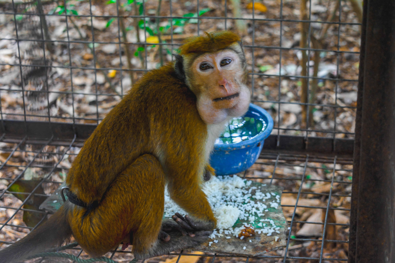Tierschutz, Sri Lanka