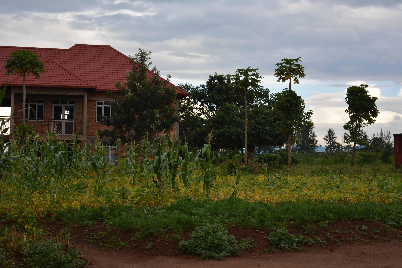 Umweltschutz/Feld Ruanda