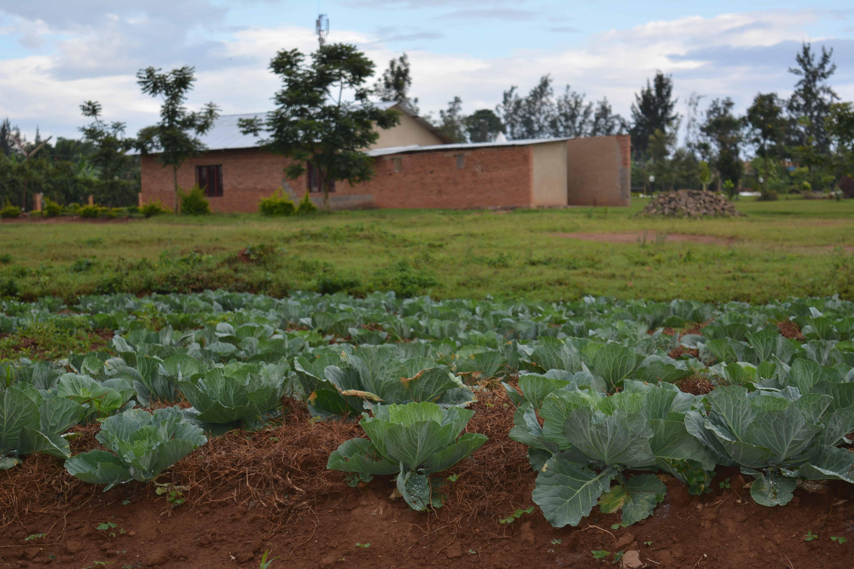 Umweltschutz/Garten Ruanda