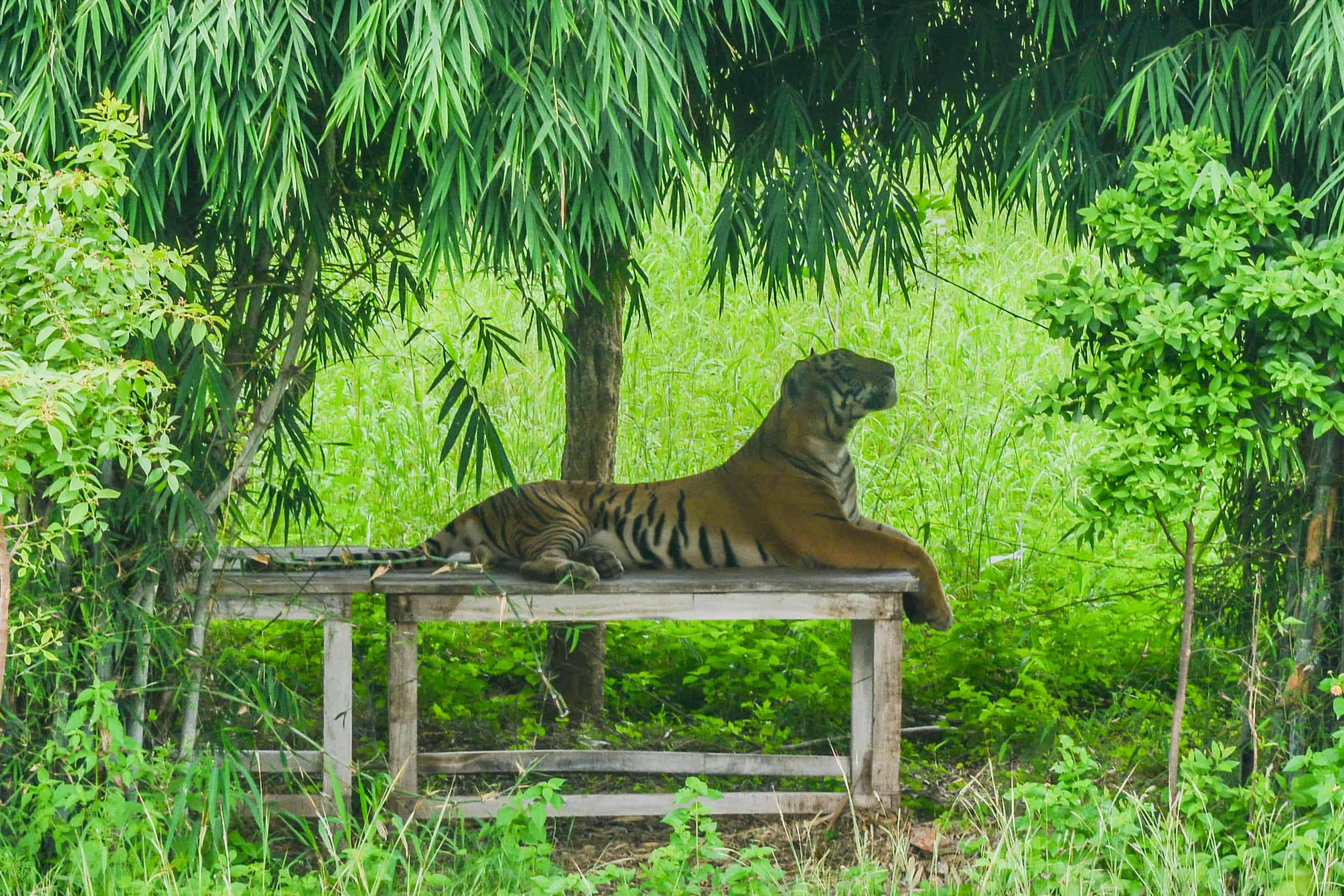 Wildlife, Indien